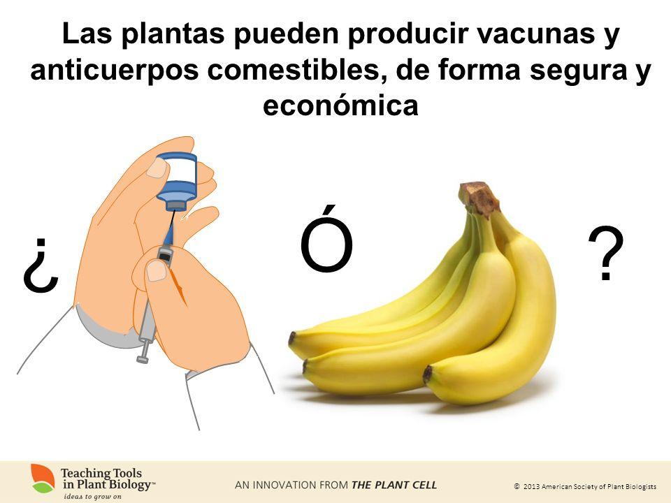 Las plantas pueden producir vacunas y anticuerpos comestibles, de forma segura y económica