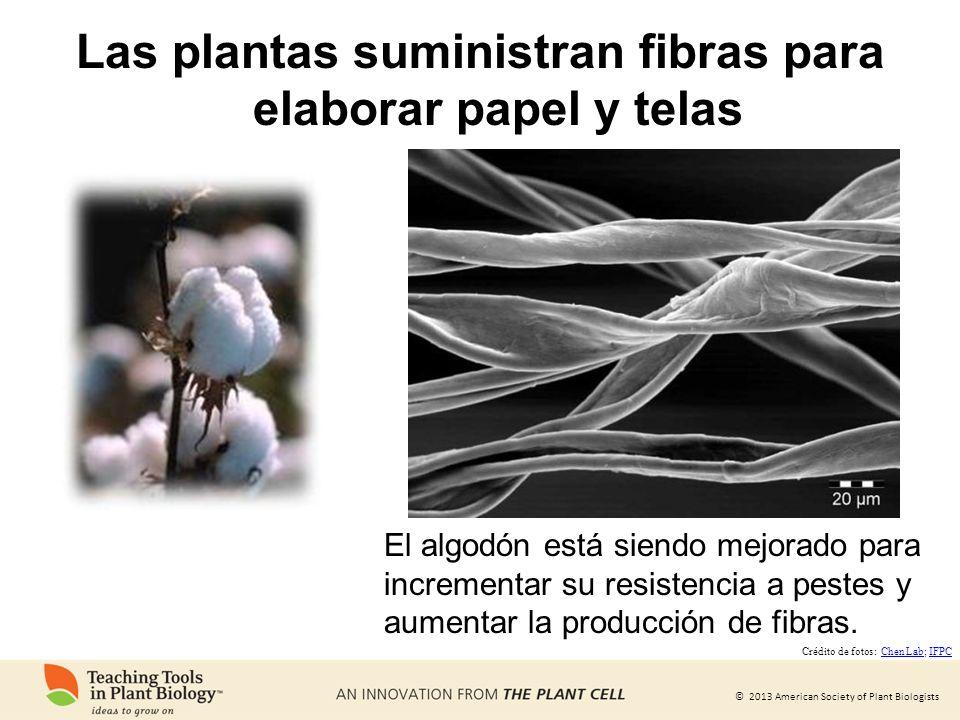 Las plantas suministran fibras para elaborar papel y telas