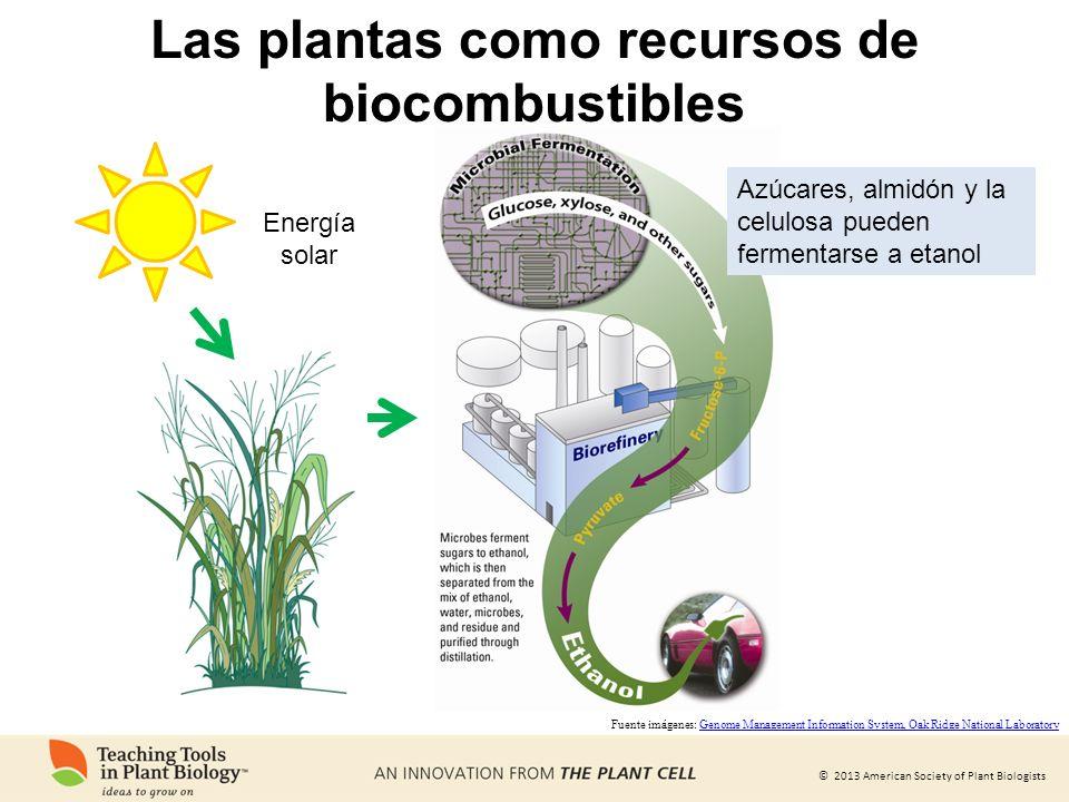 Las plantas como recursos de biocombustibles
