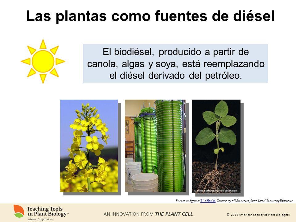 Las plantas como fuentes de diésel