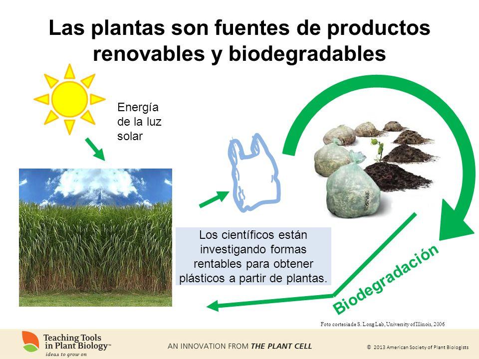 Las plantas son fuentes de productos renovables y biodegradables