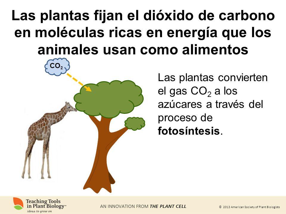 Las plantas fijan el dióxido de carbono en moléculas ricas en energía que los animales usan como alimentos