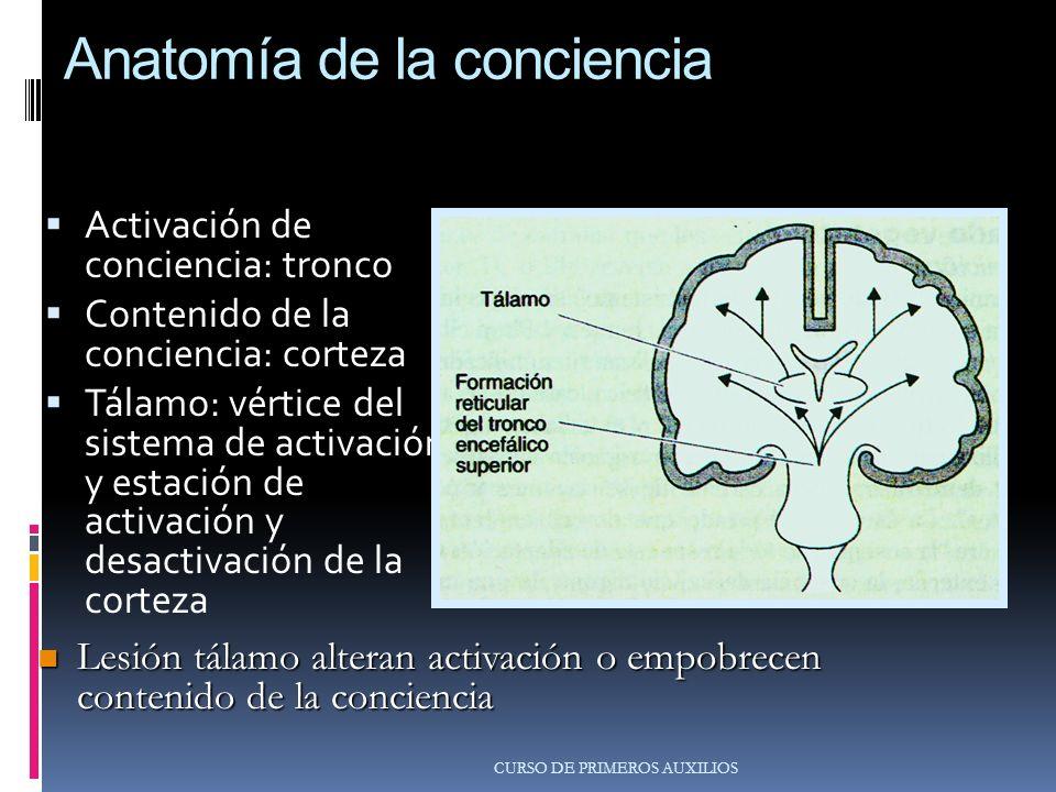Anatomía de la conciencia