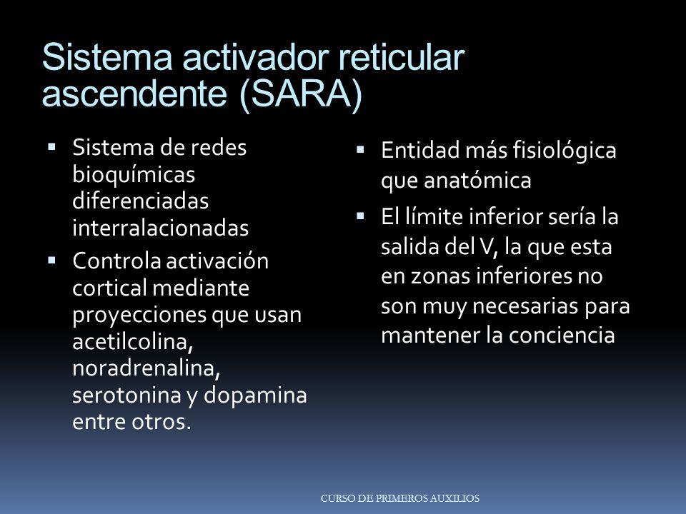 Sistema activador reticular ascendente (SARA)