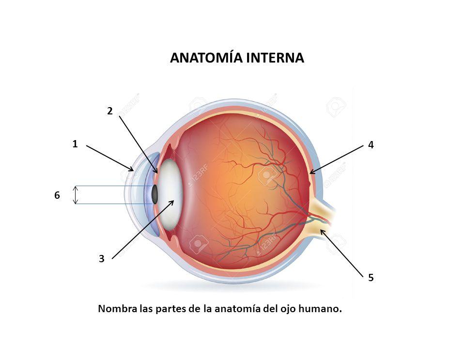 Perfecto Anatomía Del Ojo Y La Función Elaboración - Anatomía de Las ...