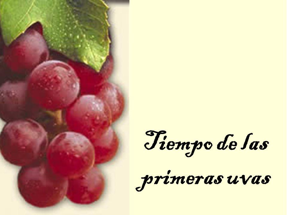 Tiempo de las primeras uvas
