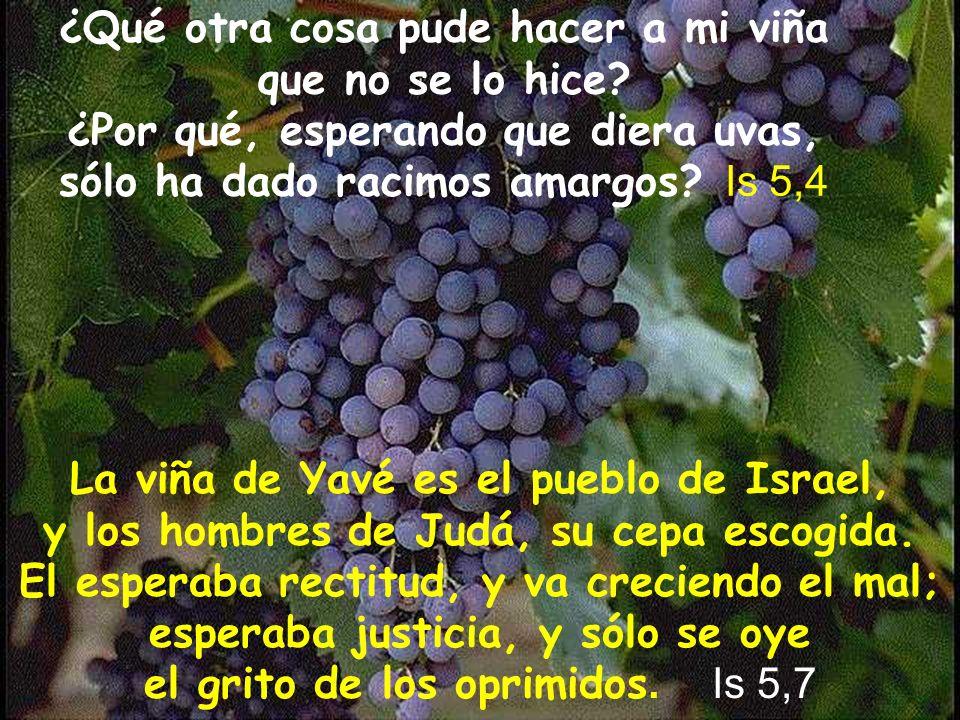 La viña de Yavé es el pueblo de Israel,