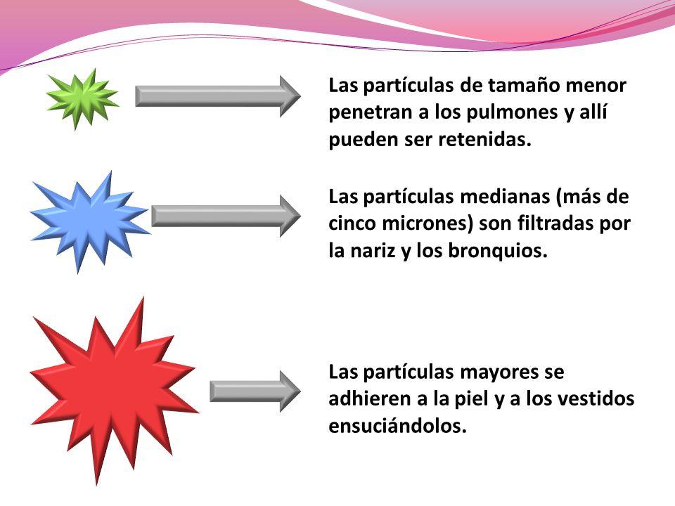 Las partículas de tamaño menor penetran a los pulmones y allí pueden ser retenidas.