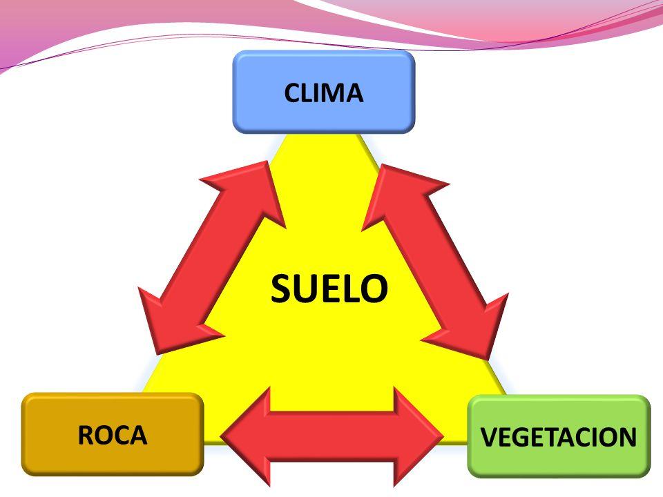 CLIMA SUELO ROCA VEGETACION