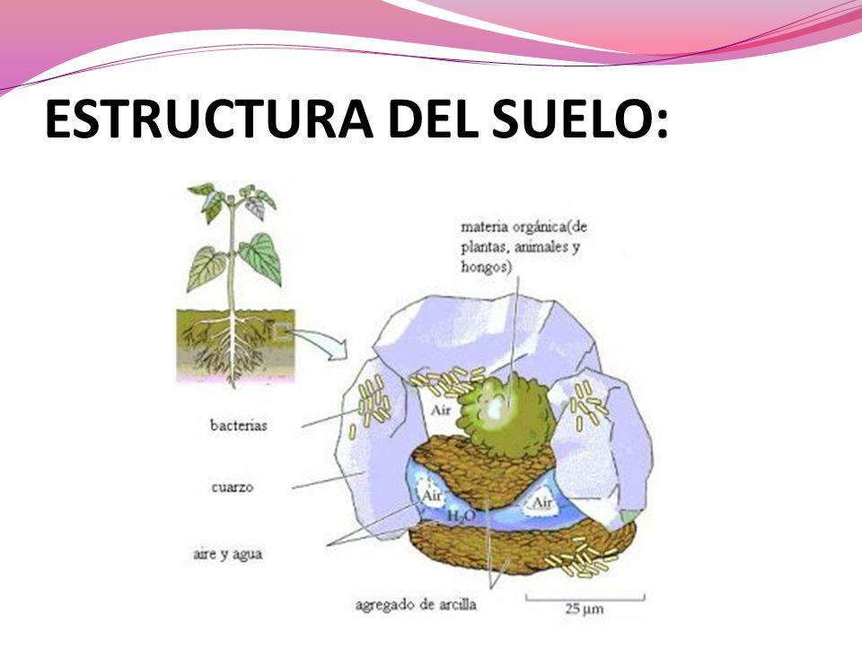 ESTRUCTURA DEL SUELO: