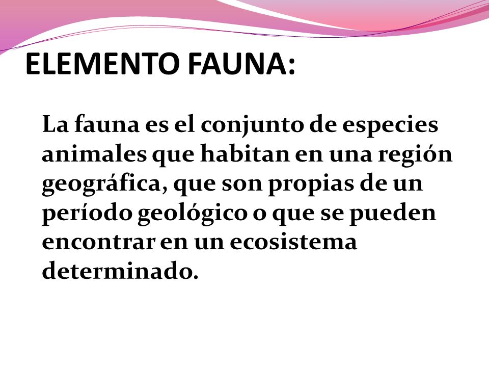 ELEMENTO FAUNA: