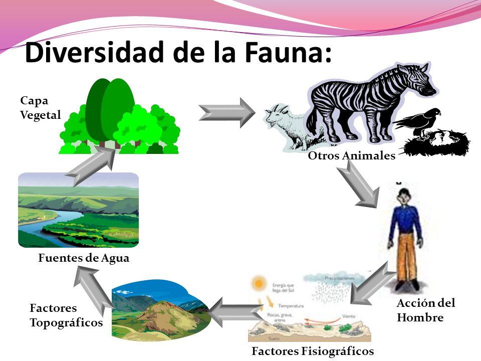 Diversidad de la Fauna: