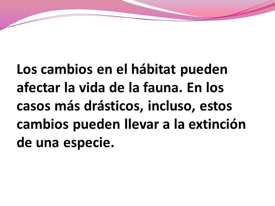 Los cambios en el hábitat pueden afectar la vida de la fauna