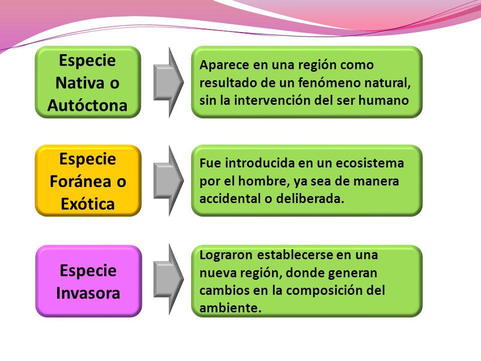 Especie Nativa o Autóctona Especie Foránea o Exótica