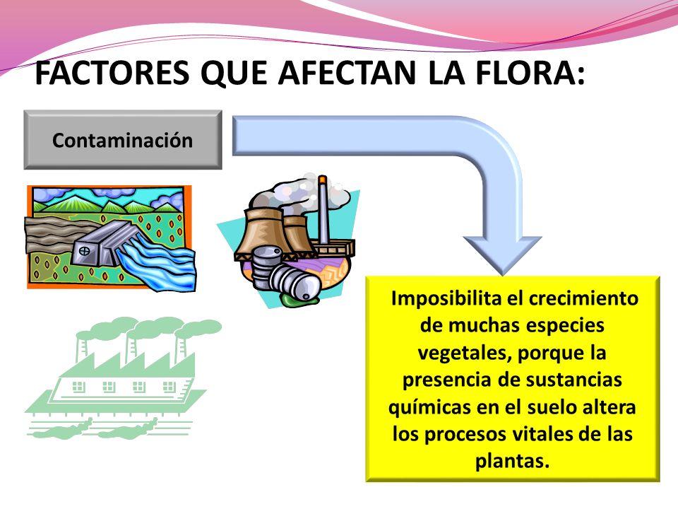 FACTORES QUE AFECTAN LA FLORA: