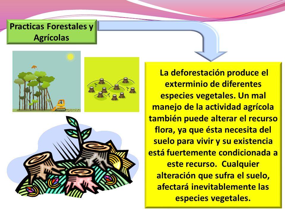 Practicas Forestales y Agrícolas