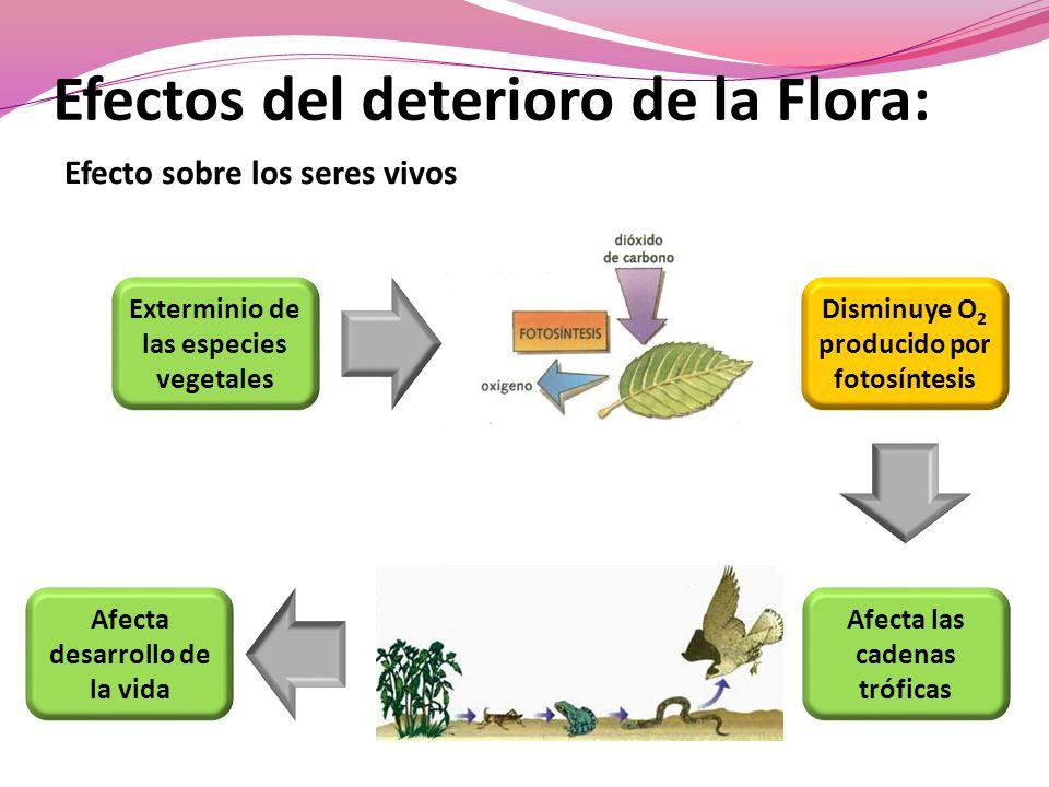 Efectos del deterioro de la Flora: