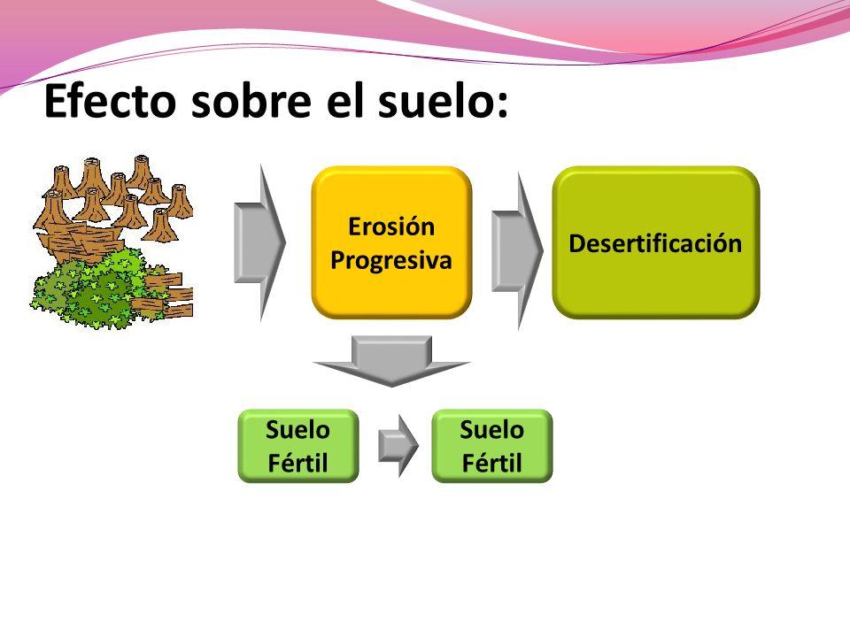 Efecto sobre el suelo: Erosión Progresiva Desertificación Suelo Fértil