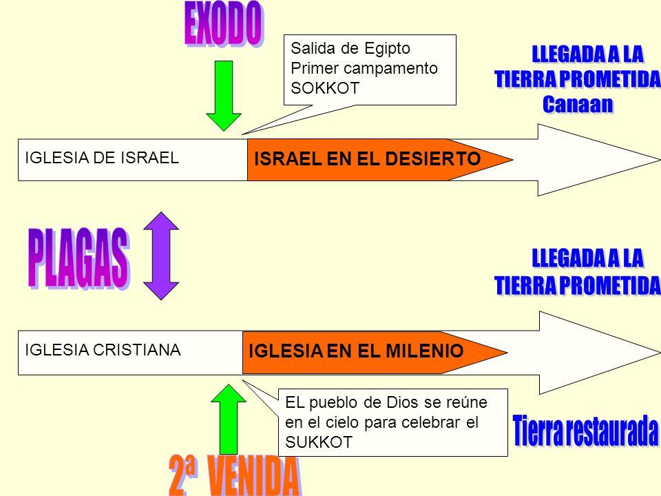 EXODO PLAGAS 2ª VENIDA LLEGADA A LA TIERRA PROMETIDA Canaan