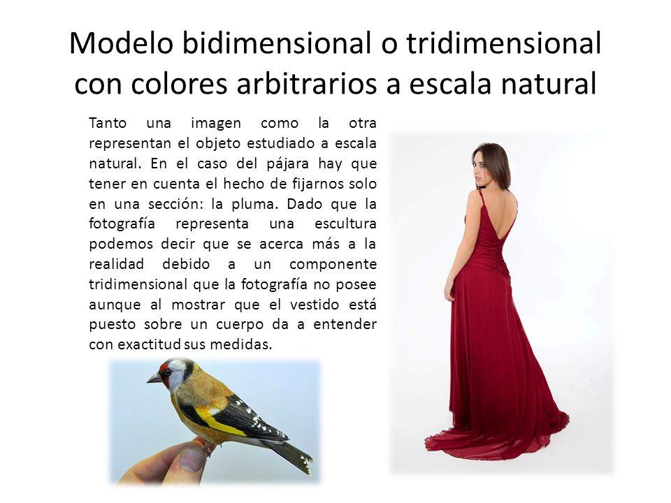 Modelo bidimensional o tridimensional con colores arbitrarios a escala natural