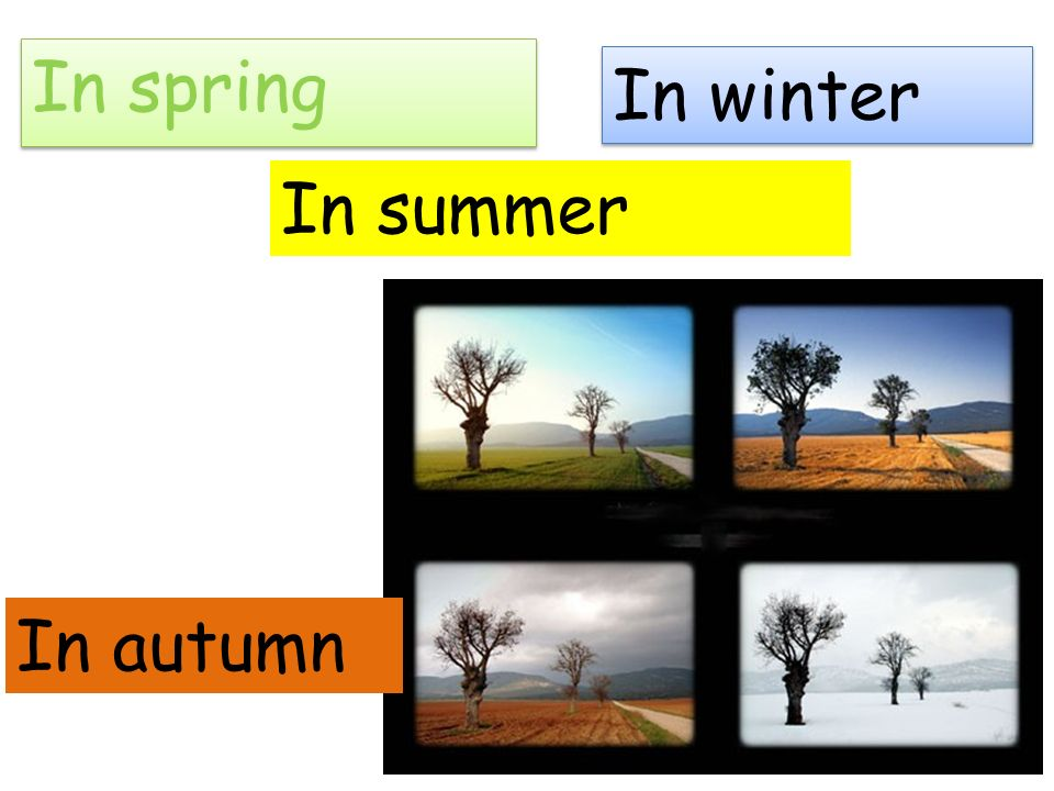 In spring In winter In summer In autumn