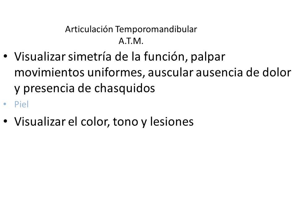 Articulación Temporomandibular A.T.M.