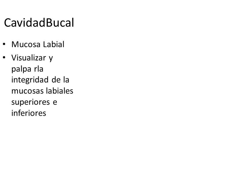 CavidadBucal Mucosa Labial