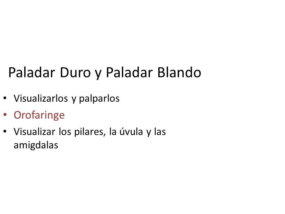 Paladar Duro y Paladar Blando