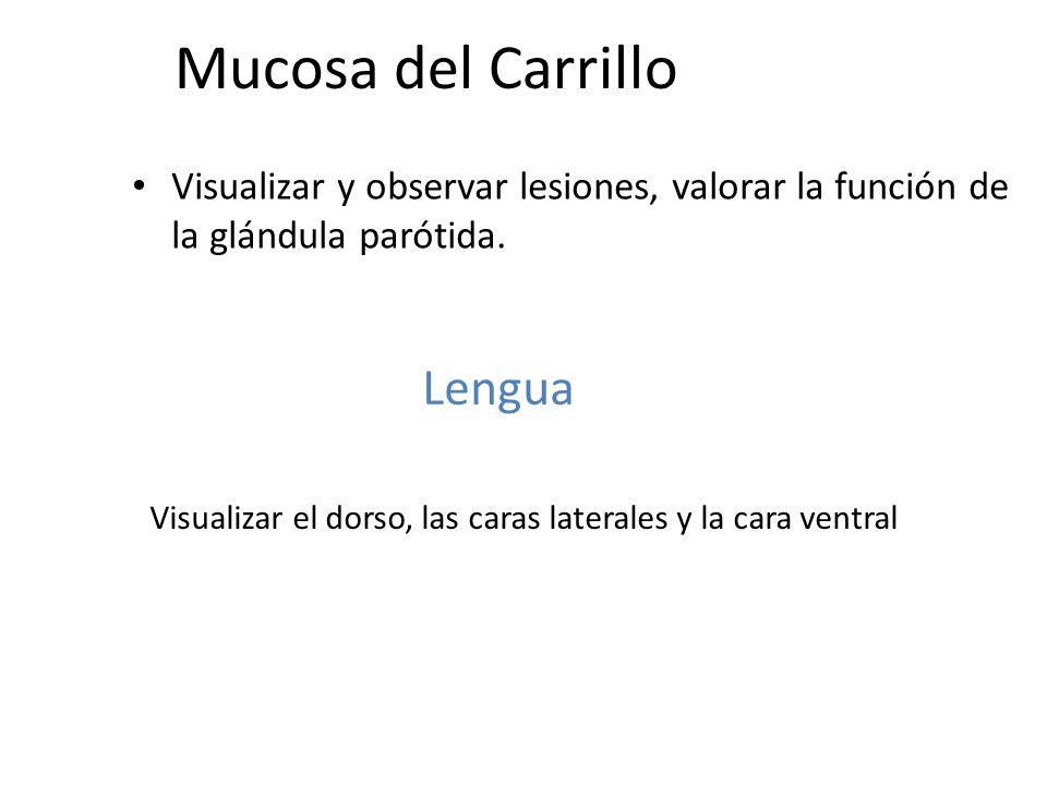 Visualizar el dorso, las caras laterales y la cara ventral