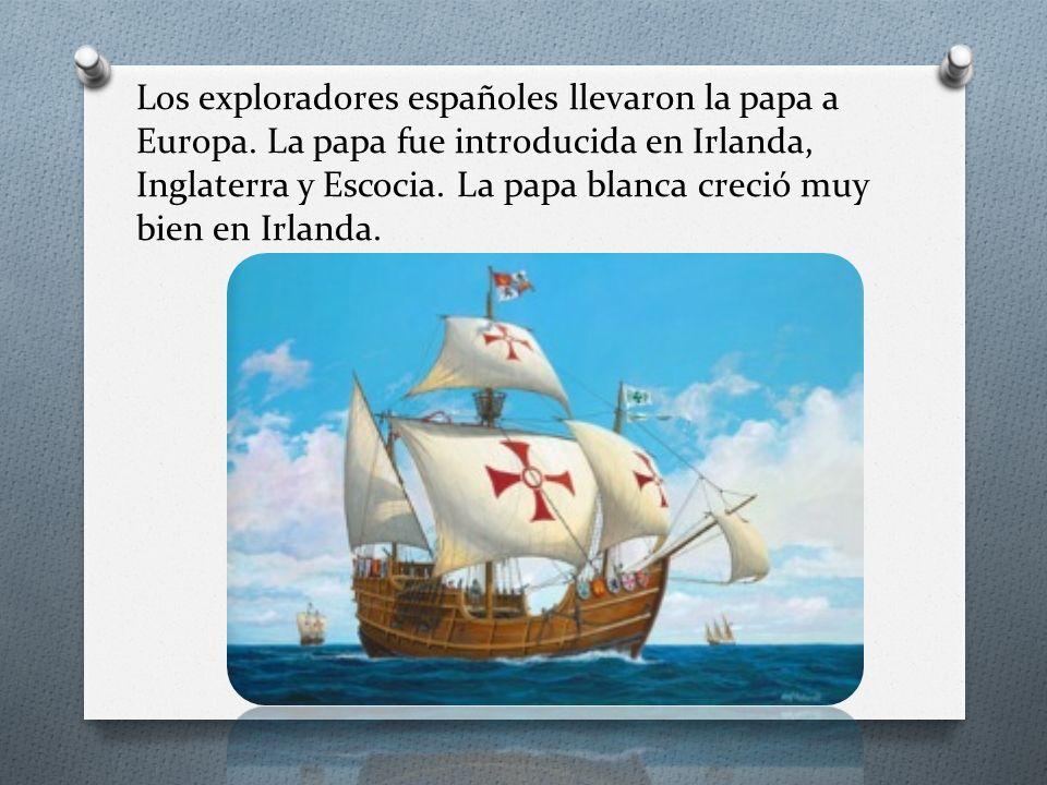Los exploradores españoles llevaron la papa a Europa