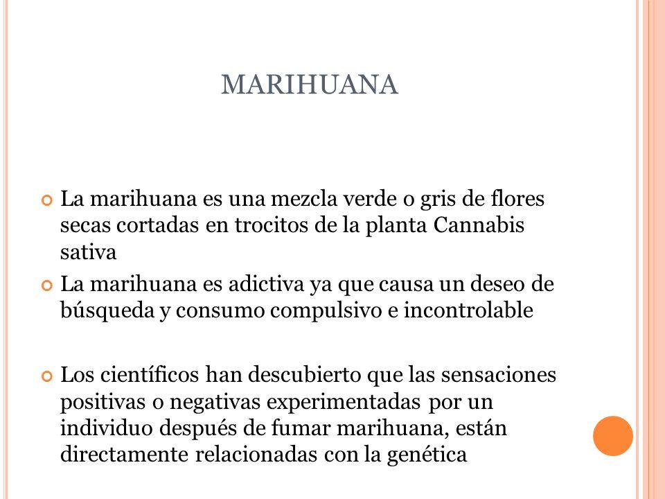 MARIHUANA La marihuana es una mezcla verde o gris de flores secas cortadas en trocitos de la planta Cannabis sativa.