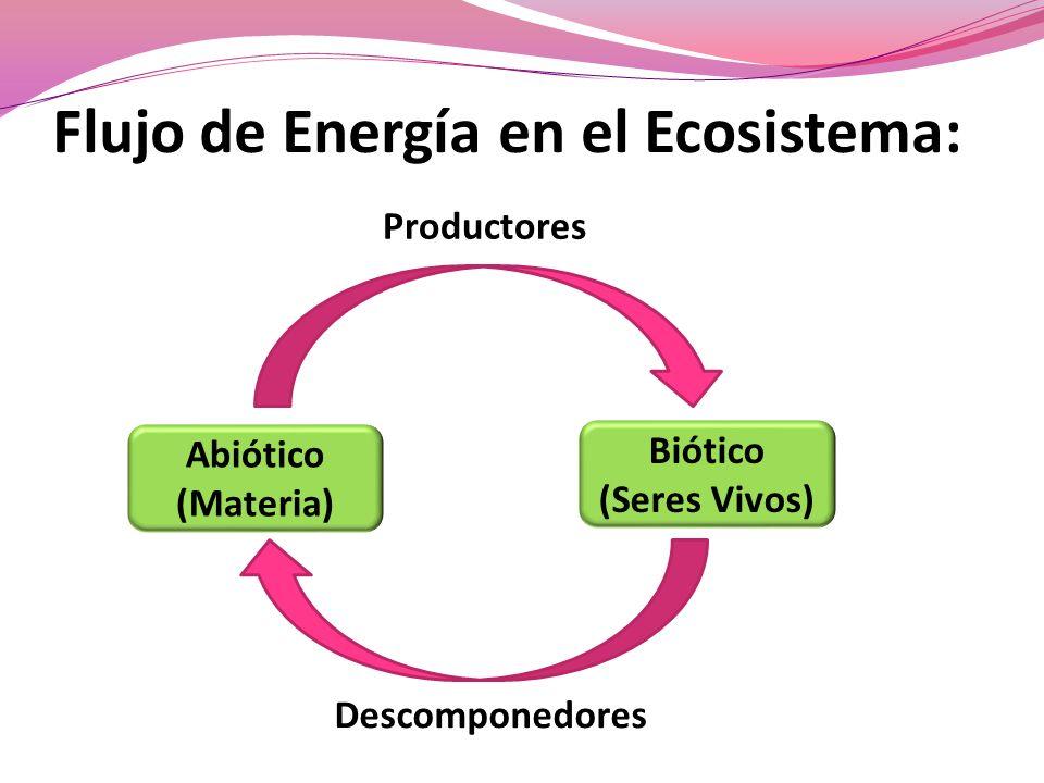 Flujo de Energía en el Ecosistema: