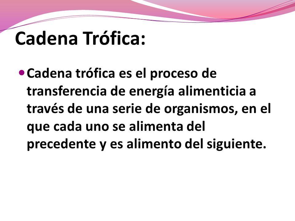 Cadena Trófica: