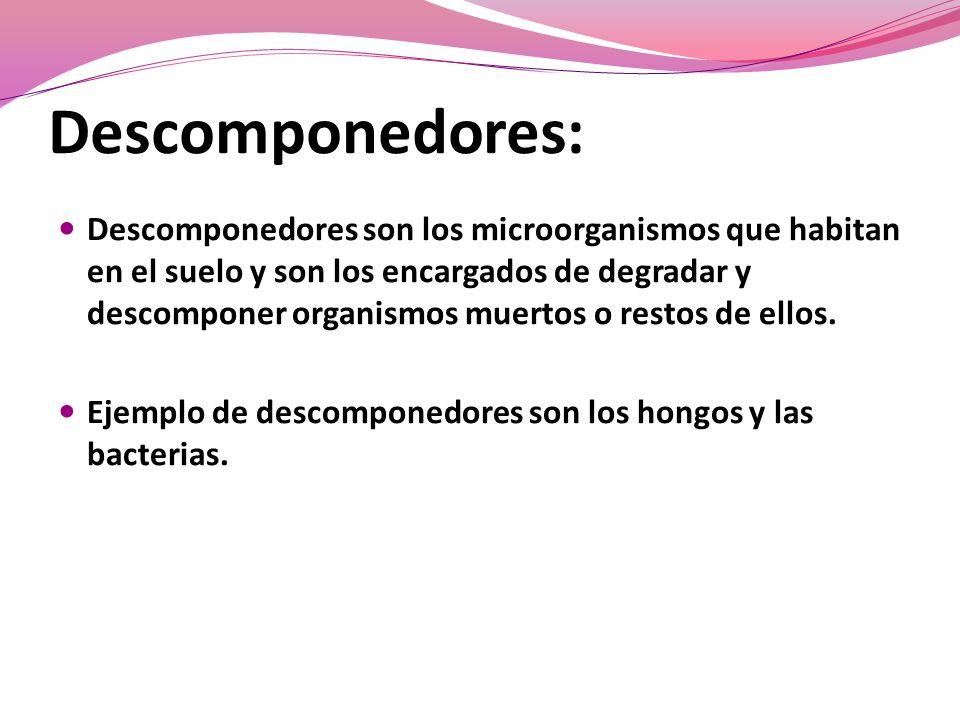 Descomponedores:
