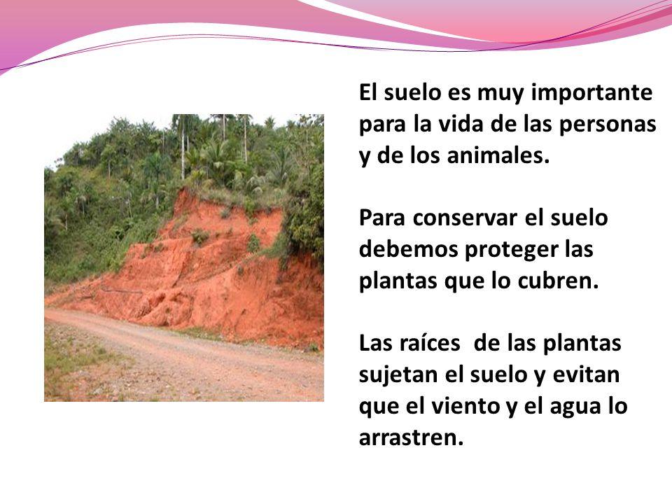 El suelo es muy importante para la vida de las personas y de los animales.
