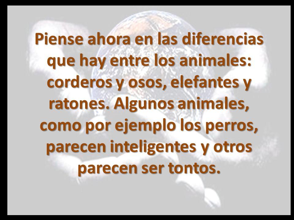 Piense ahora en las diferencias que hay entre los animales: corderos y osos, elefantes y ratones.