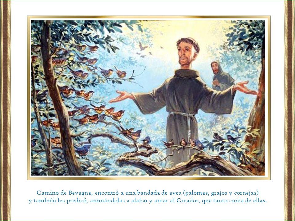 Camino de Bevagna, encontró a una bandada de aves (palomas, grajos y cornejas)