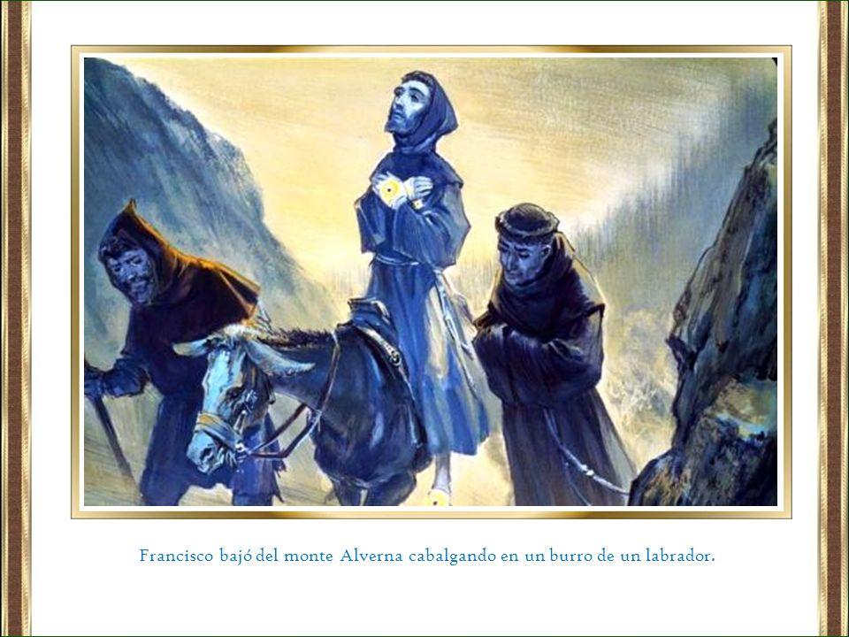 Francisco bajó del monte Alverna cabalgando en un burro de un labrador.