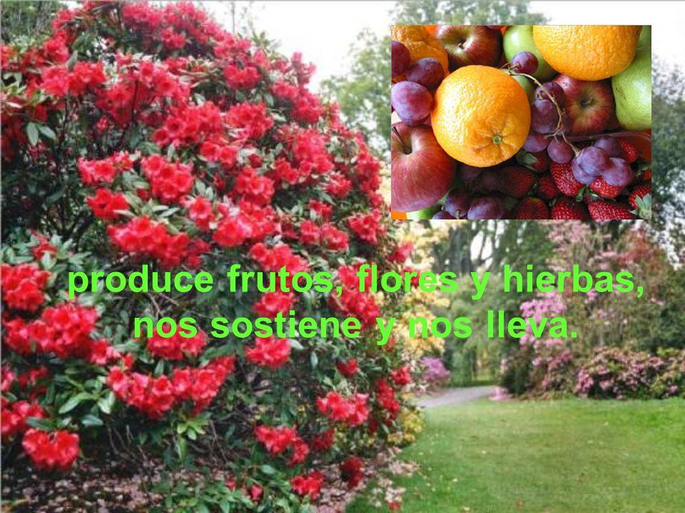 produce frutos, flores y hierbas, nos sostiene y nos lleva.