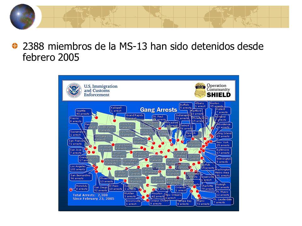 2388 miembros de la MS-13 han sido detenidos desde febrero 2005