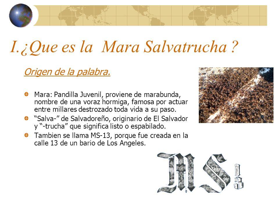 I.¿Que es la Mara Salvatrucha