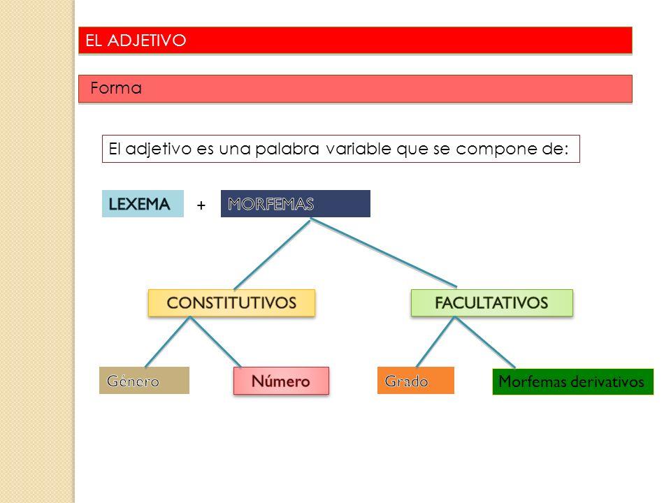 EL ADJETIVO Forma. El adjetivo es una palabra variable que se compone de: LEXEMA. + MORFEMAS. CONSTITUTIVOS.