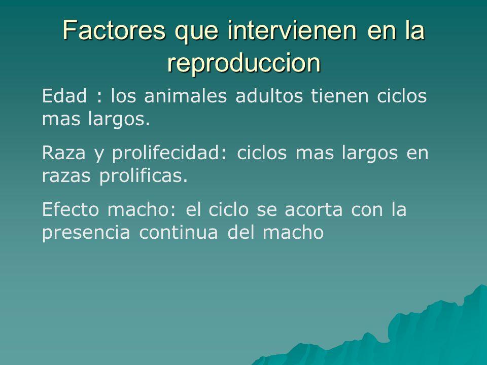 Factores que intervienen en la reproduccion