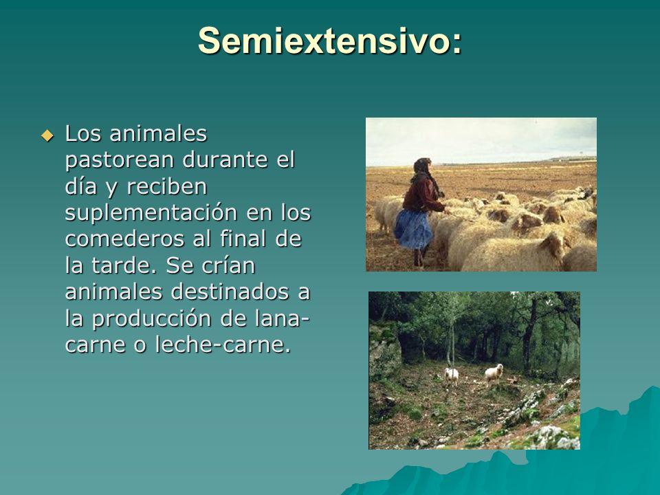 Semiextensivo: