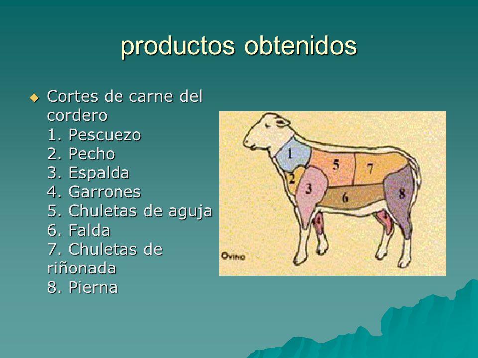 productos obtenidos