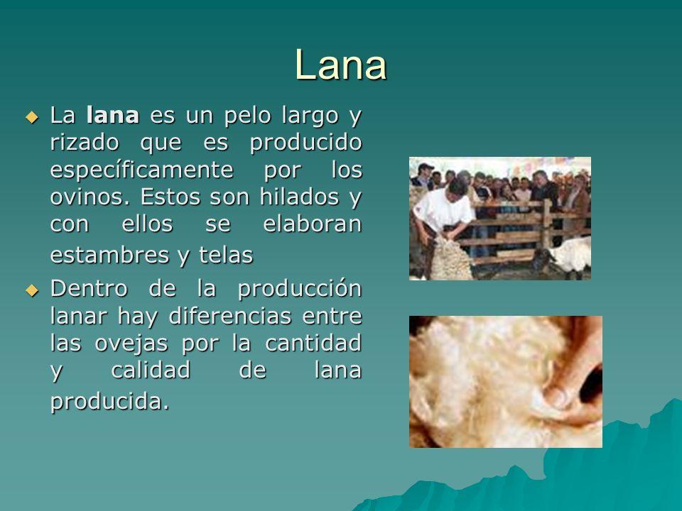 Lana La lana es un pelo largo y rizado que es producido específicamente por los ovinos. Estos son hilados y con ellos se elaboran estambres y telas.