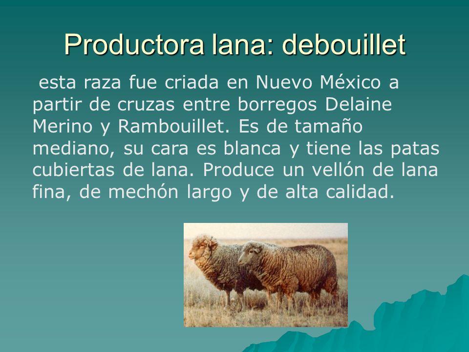Productora lana: debouillet