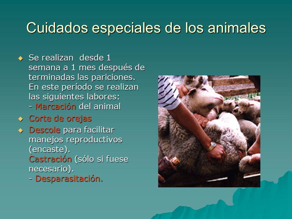 Cuidados especiales de los animales
