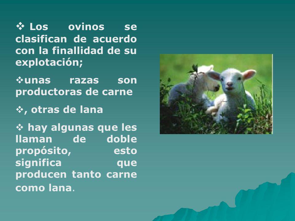 Los ovinos se clasifican de acuerdo con la finallidad de su explotación;