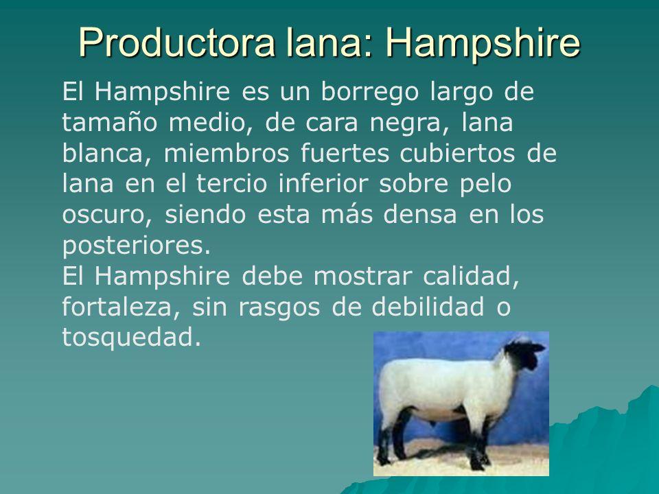 Productora lana: Hampshire